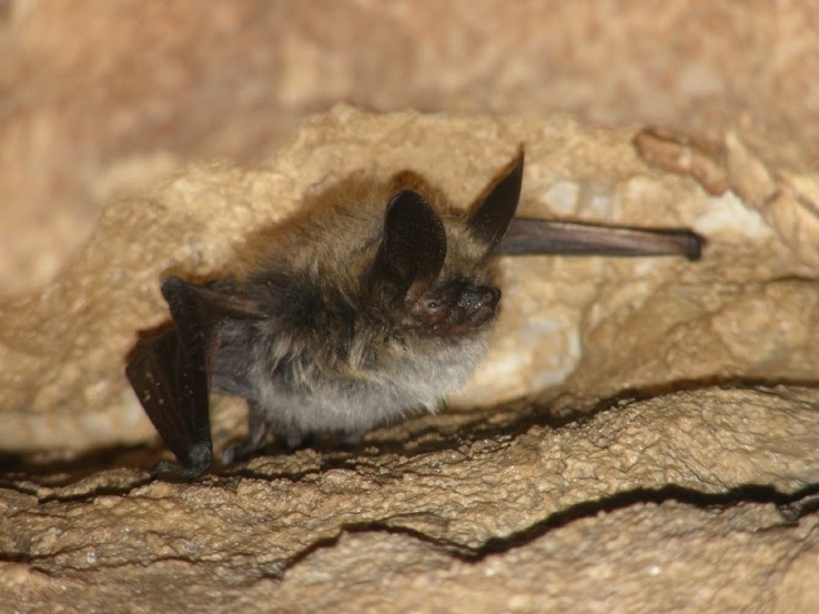 Bats and Covid: Information Session